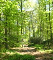 Forêts normandes
