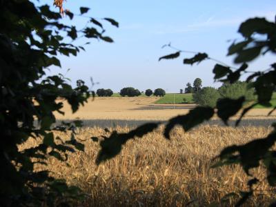 Photo 12 du domaine